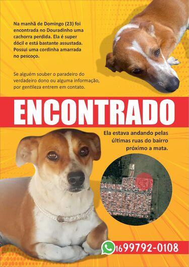 Cachorro é encontrado no Douradinho -