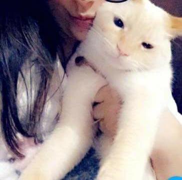 Gato Tico está desaparecido -