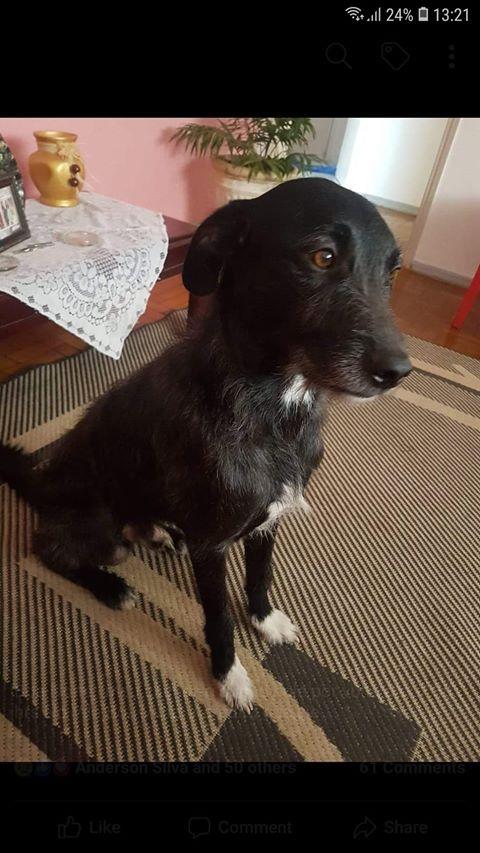 Cachorro Silvestre está desaparecido -