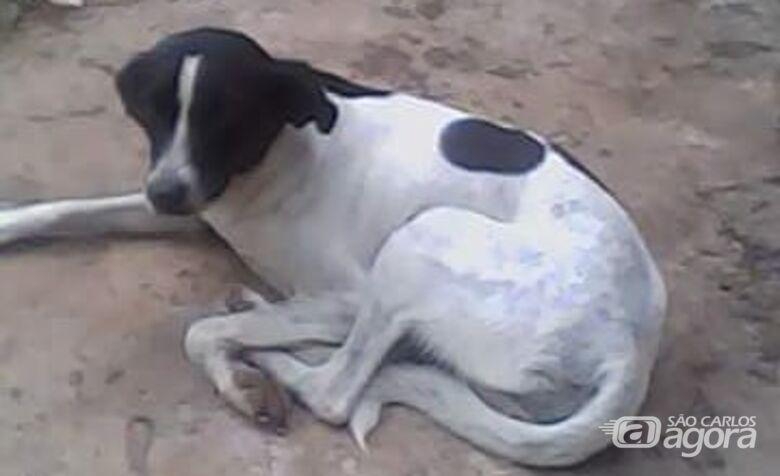 Nina desaparece e proprietários buscam informações; criança sente a falta da cachorrinha - Crédito: Divulgação