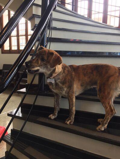 Cachorrinho Bob está perdido e procura o seu dono - Crédito: Divulgação