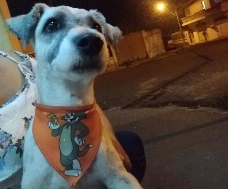 Cachorrinho é resgatado na Vila Nery - Crédito: Divulgação
