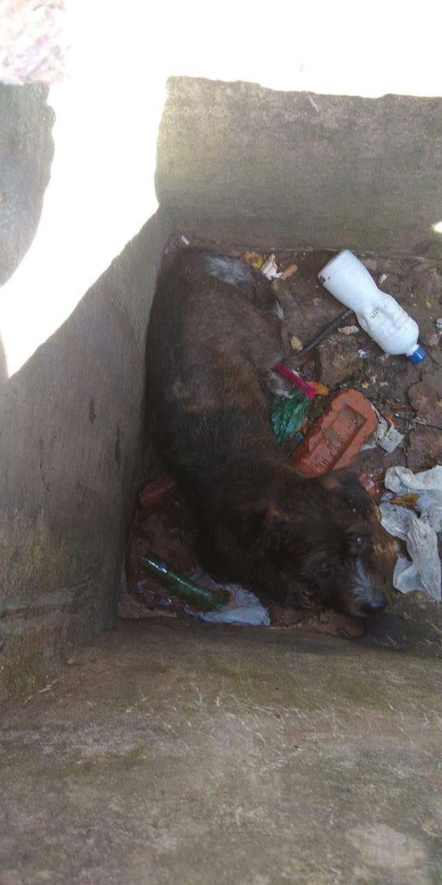 Cãozinho cego cai em bueiro aberto no Jardim Zavaglia - Crédito: Divulgação