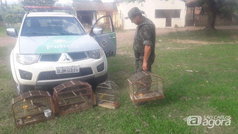 Polícia Ambiental resgata aves silvestres presas em cativeiro - Crédito: Divulgação