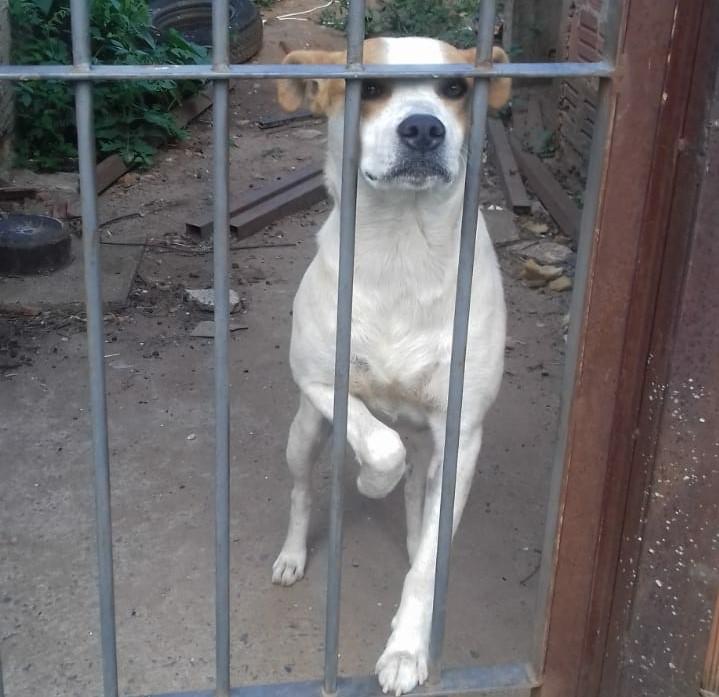 Dono se muda e deixa cão em casa abandonada no Tijuco Preto - Crédito: Marcos Escrivani