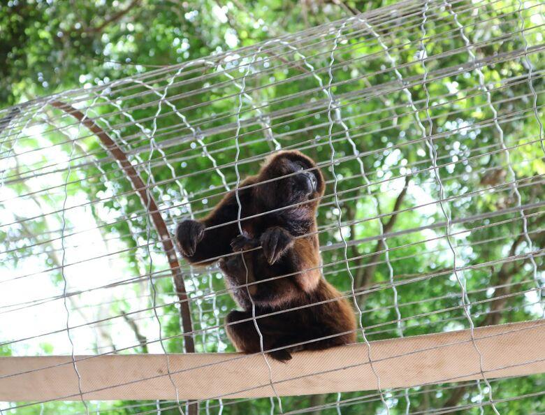 Bugios ganham novo recinto no Parque Ecológico - Crédito: Divulgação