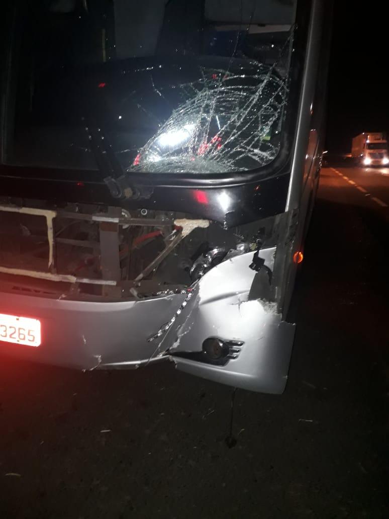 Ônibus da Cometa atropela e mata cavalo na Washington Luís - Crédito: Fotos São Carlos Agora