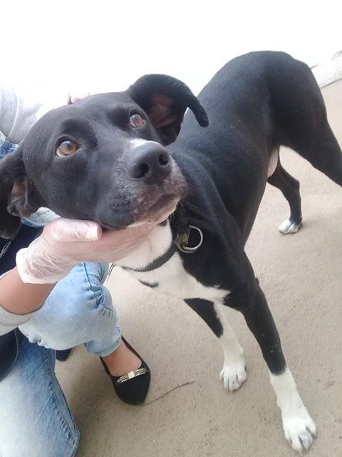 Cachorro é encontrado na Vila Prado -