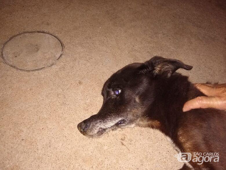 Após ser espancado, cachorrinho é abandonado com focinho quebrado e precisa de ajuda - Crédito: Divulgação