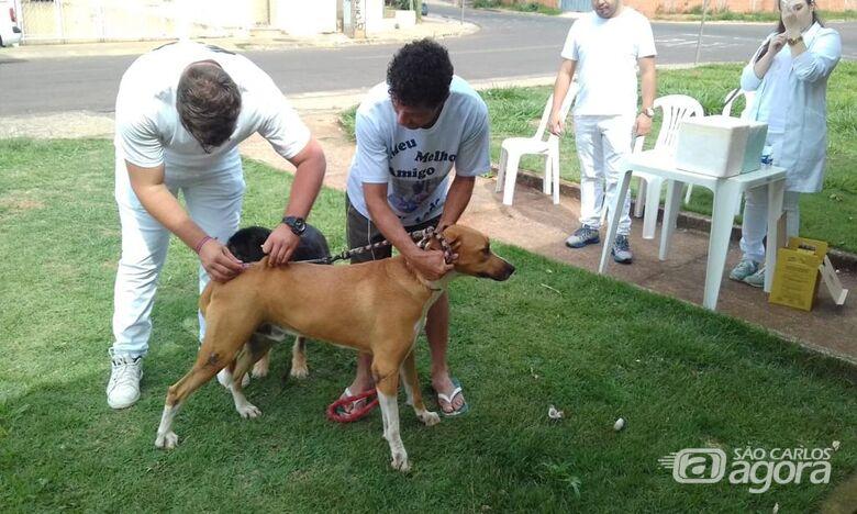 Em São Carlos, mais de 17 mil animais são imunizados - Crédito: Divulgação