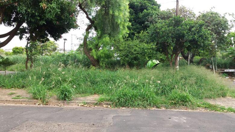 Mato encobre até orelhão em praça pública - Crédito: Divulgação