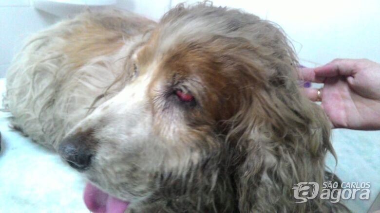 Cachorrinha resgatada é diagnosticada com tumor e precisa de ajuda - Crédito: Divulgação
