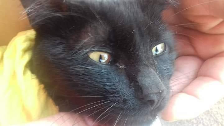 Morte de gato no Canil Municipal vira polêmica e caso de polícia - Crédito: Divulgação