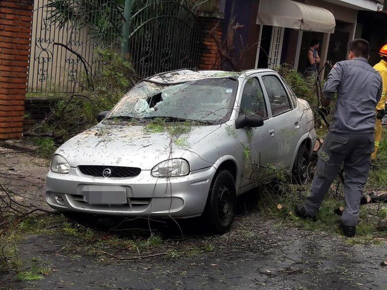 Árvore despenca em cima de carro na Vila Brasília - Crédito: Maycon Maximino