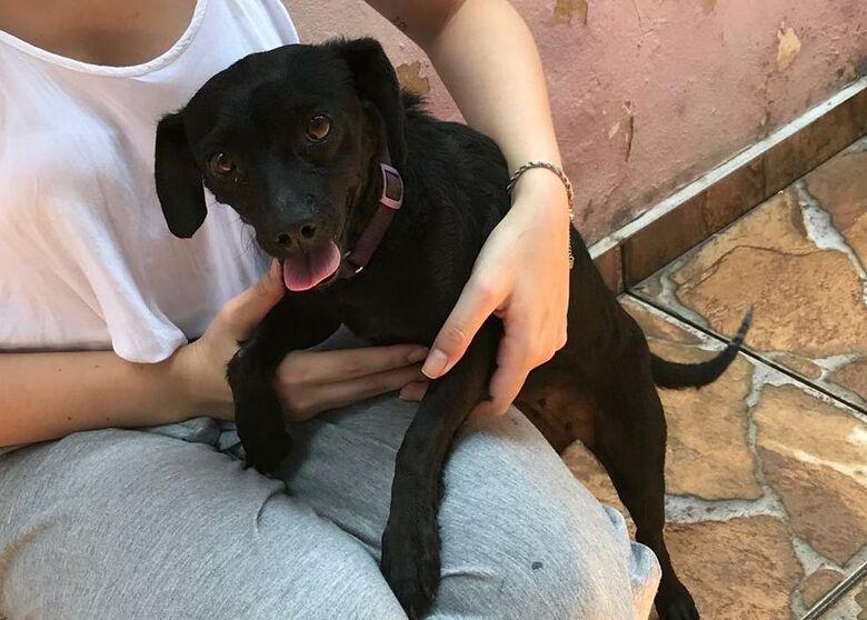 Cachorrinha abandonada procura um lar - Crédito: Divulgação