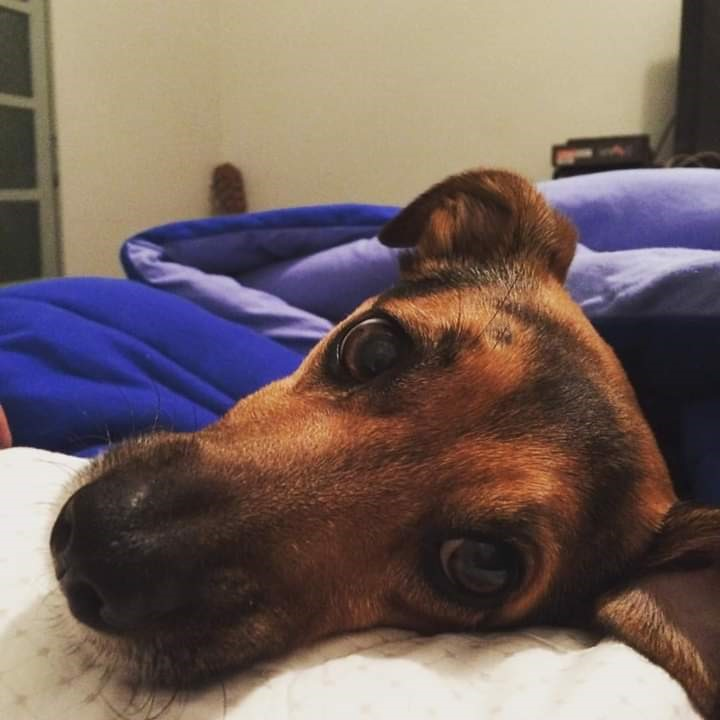 Após capotamento, família procura cachorrinho que estava no veículo - Crédito: Divulgação