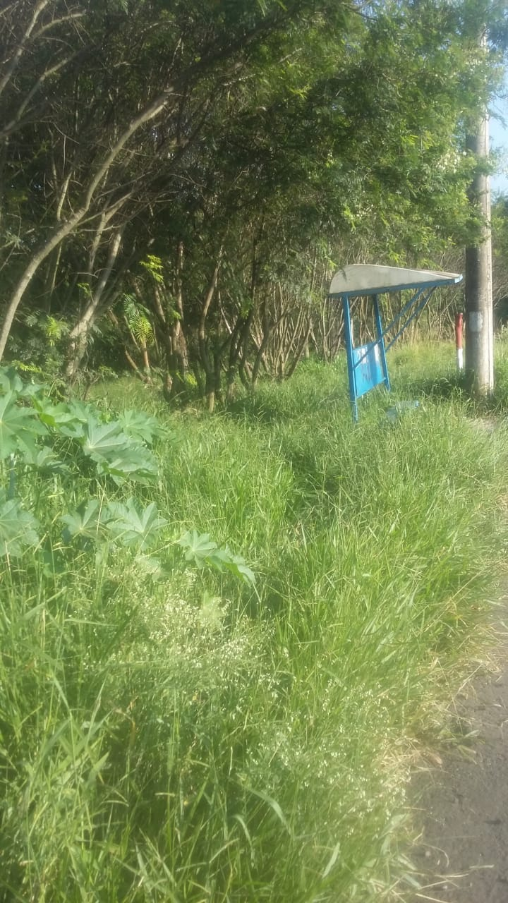 Mato alto toma conta terreno abandonado no Astolpho - Crédito: Divulgação