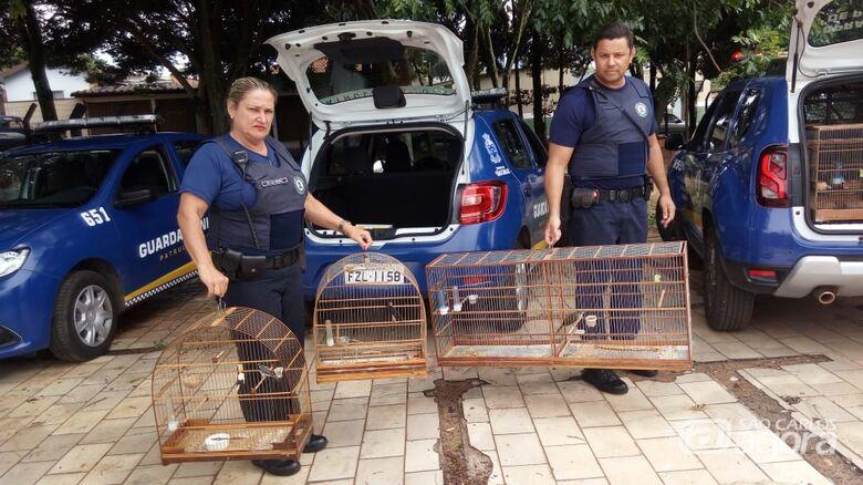Guarda Municipal apreende aves mantidas irregularmente em cativeiro no Cidade Aracy -