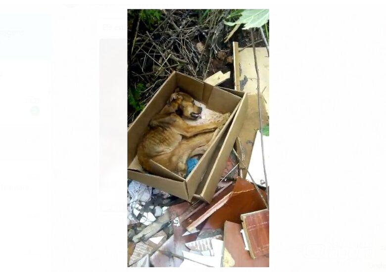 Cachorro é deixado agonizando em caixa de papelão no Antenor Garcia - Crédito: Reprodução