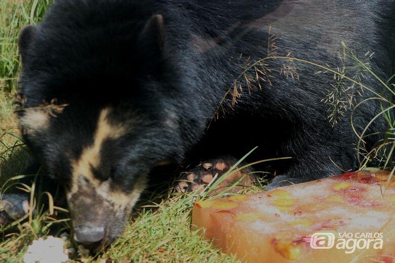 Animais do Parque Ecológico ganham sorvetes para amenizar o calor - Crédito: Divulgação