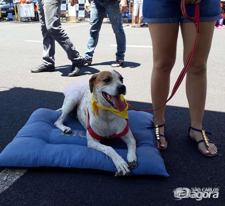 Cães e gatos devem ganhar novas famílias após Feira de Adoção - Crédito: Divulgação