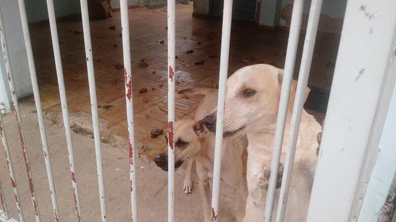 Inquilinos vão embora e abandonam três cães, afirma proprietária da casa - Crédito: Divulgação