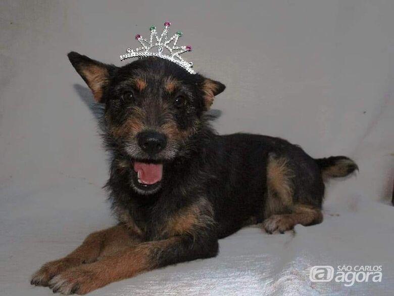 Feira de adoção de animais acontece durante o 3º Pet Day - Crédito: Divulgação
