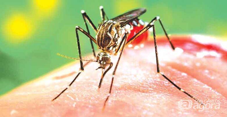 Epidemia: Araraquara registra 906 casos de Dengue neste ano - Crédito: Imagem Ilustrativa