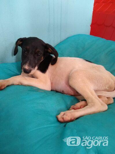 Cães procuram novos lares em São Carlos - Crédito: Divulgação