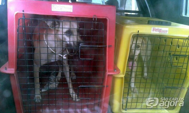 Cães que foram abandonados por antigos inquilinos são resgatados no Aracy - Crédito: Divulgação