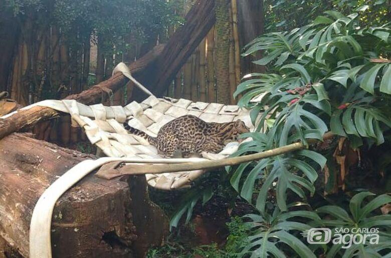 Mangueiras de combate a incêndio se transformam em redes para os animais do Parque Ecológico - Crédito: Divulgação