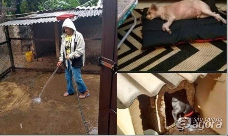 Mulher que cuida de 50 cães e 20 gatos precisa de ajuda -