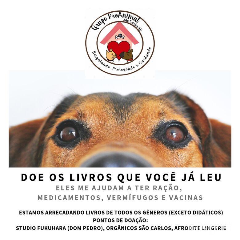 Grupo Pro-Animal arrecada livros e prepara feira solidária - Crédito: Divulgação