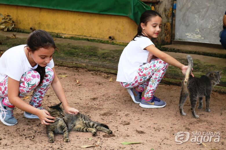 19 animais são adotados em ação realizada no Canil e Gatil Municipal - Crédito: Divulgação