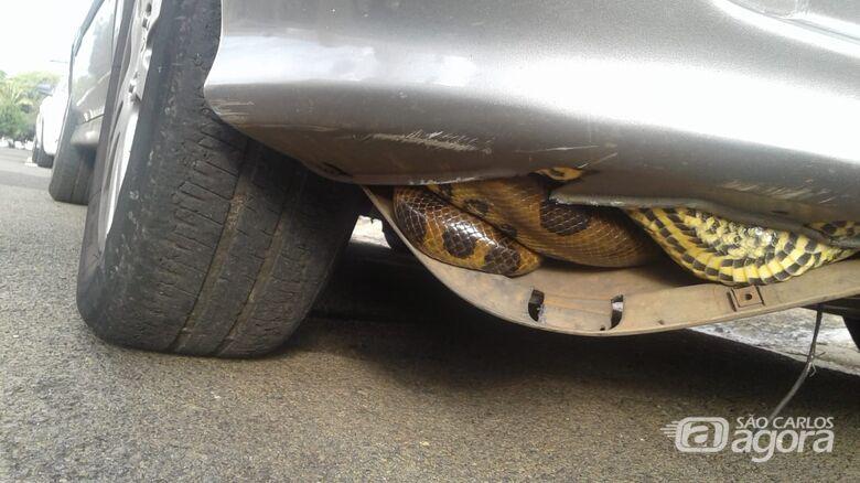 Cobra é encontrada dentro de carro - Crédito: Araraquara 24 horas