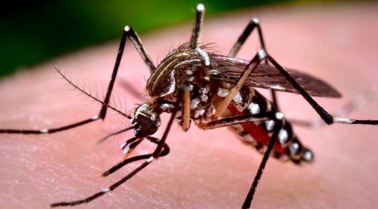 Com 4.771 casos confirmados, Araraquara registra 5ª morte por dengue - Crédito: Divulgação