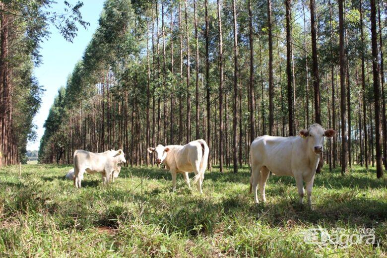 Pesquisas na Embrapa São Carlos buscam alternativas de produção sustentáveis para diminuir o impacto da pecuária no clima - Crédito: Gisele Rosso