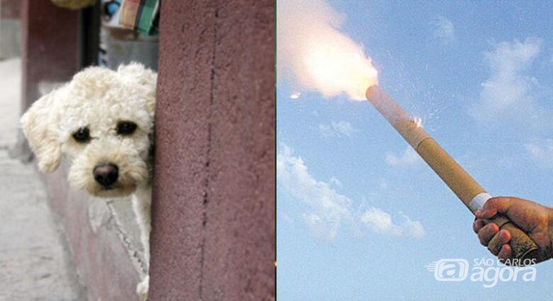 Câmara de Ibaté vai realizar audiência pública para discutir proibição de fogos de artifício - Crédito: Divulgação
