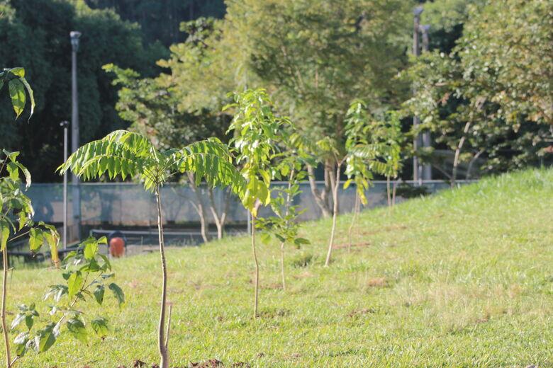 UFSCar realiza levantamento, manejo e plantio de árvores no campus sede - Crédito: Raquel Boschi - SGAS/UFSCar