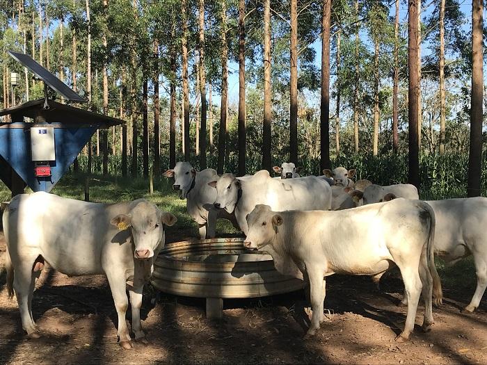 Publicação da Embrapa São Carlos ajuda produtor a calcular consumo de água por animais - Crédito: Ana Maio
