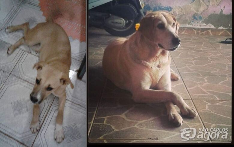 Homenagem Funerais Pet às cachorrinhas Cindy e Laira -