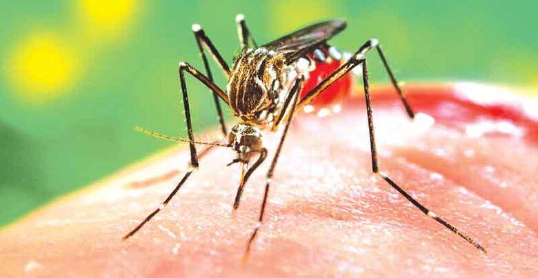 Sobe para 308 os casos de Dengue em São Carlos - Crédito: Divulgação
