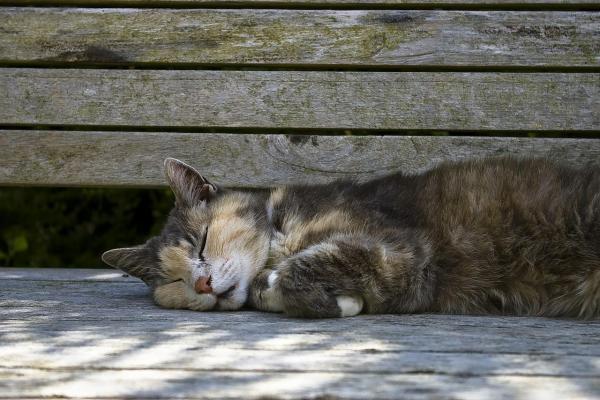 Gatos estão sendo envenenados no Tijuco Preto, garantem moradores - Crédito: Imagem Ilustrativa