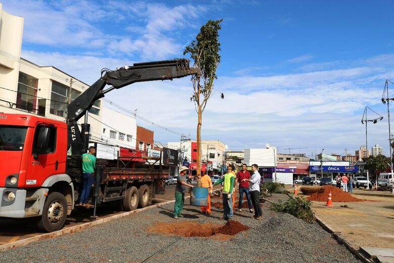 Prefeitura realiza plantio de 10 árvores nativas na Praça do Mercado Municipal - Crédito: Divulgação