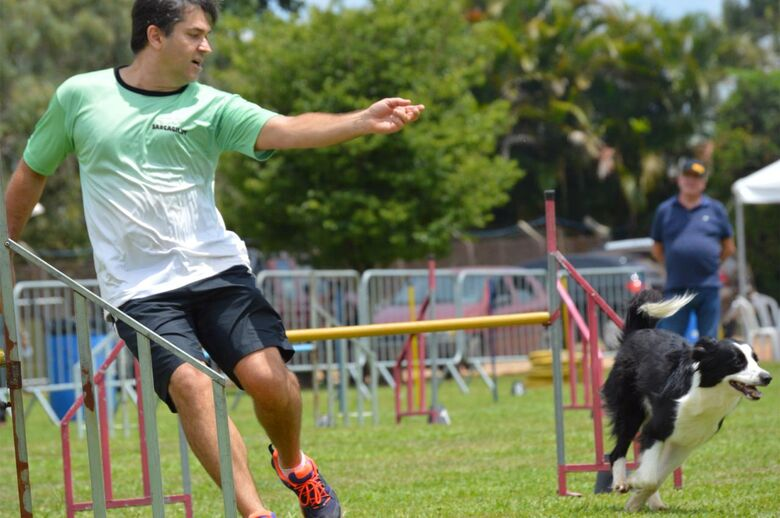Cachorra Nina, de São Carlos, é prata no Open das Américas de Agility - Crédito: Divulgação