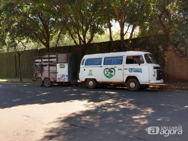 Jovem é detido com cavalo furtado do canil municipal - Crédito: São Carlos Agora