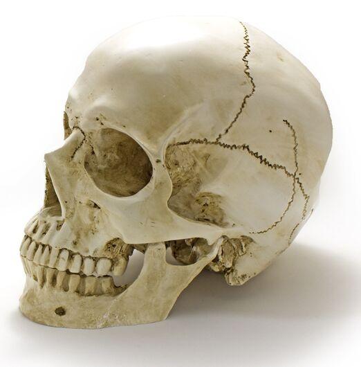 Crânio é encontrado fora do túmulo no cemitério Nossa Senhora do Carmo - Crédito: Imagem Ilustrativa