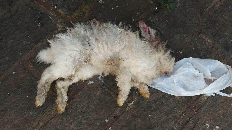 Desempregado pisa na cabeça e mata coelho no São João Batista - Crédito: São Carlos Agora