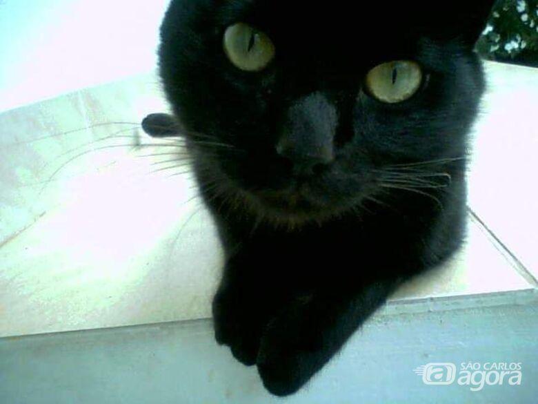 Dona oferece R$ 2 mil de recompensa para quem encontrar gatinho - Crédito: Divulgação