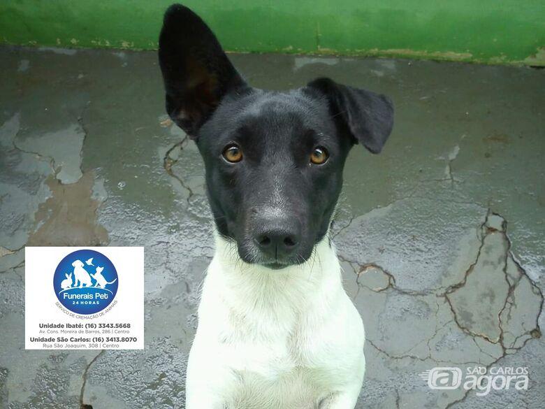 Homenagem da Funerais Pet a Cachorrinha Aika -